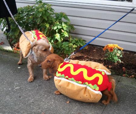 Weiner-dogs